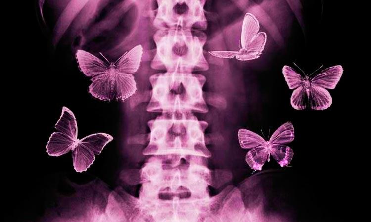 Si nada cambiara, no habría mariposas…